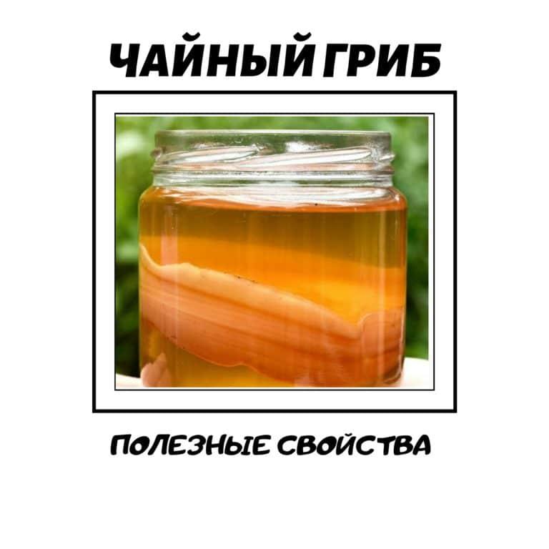Чайный гриб: полезные свойства, противопоказания, отзывы