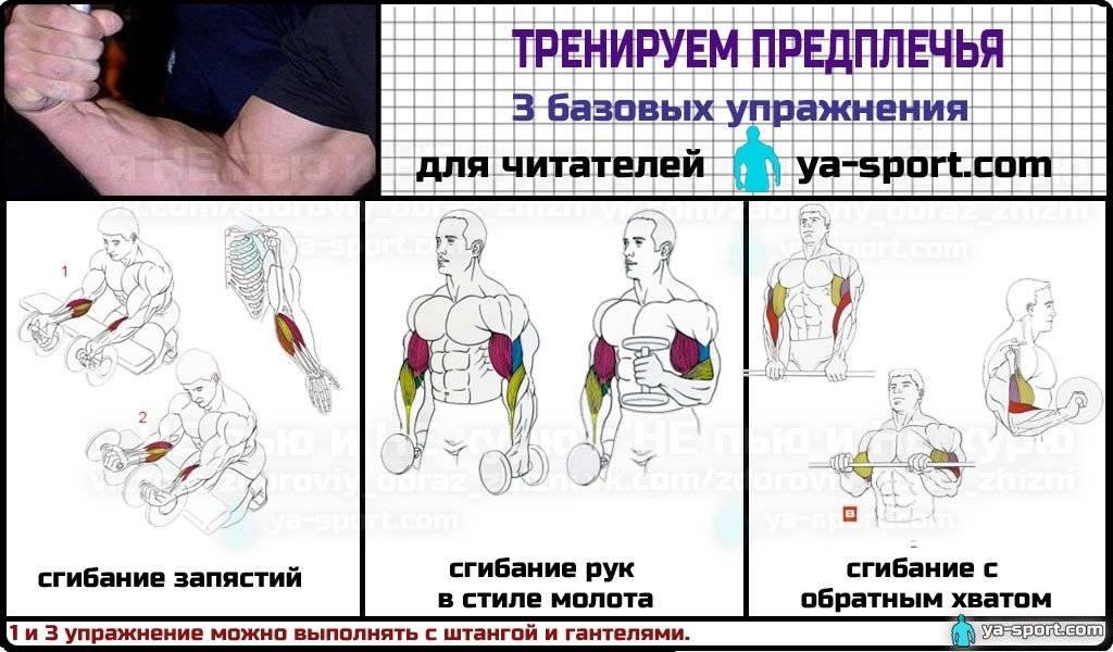 Как подкачать (накачать) руки девушке | rulebody.ru — правила тела
