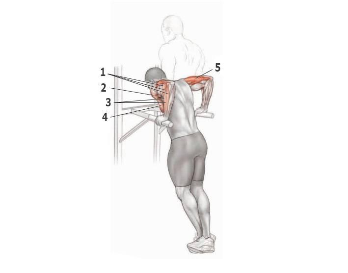 Отжимания на брусьях: как правильно отжиматься и техника выполнения