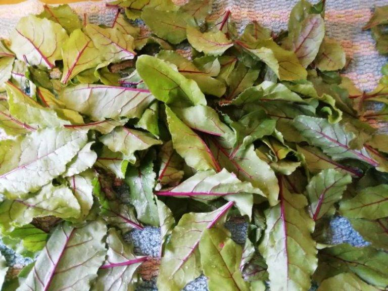 Салат со свекольными листьями рецепт