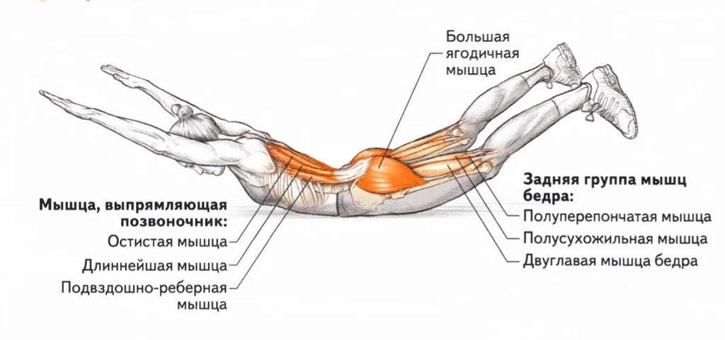 Техника выполнения упражнение ласточка