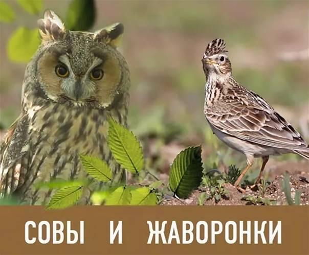 «совы» vs «жаворонки»: надо ли себя ломать?