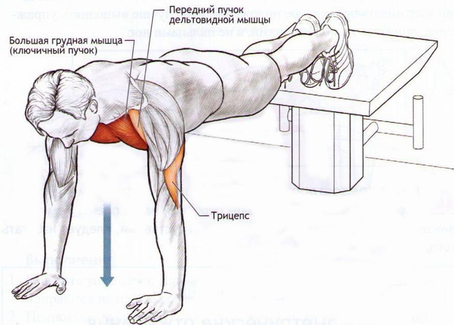 Отжимания на грудные мышцы – техника выполнения с фото и видео