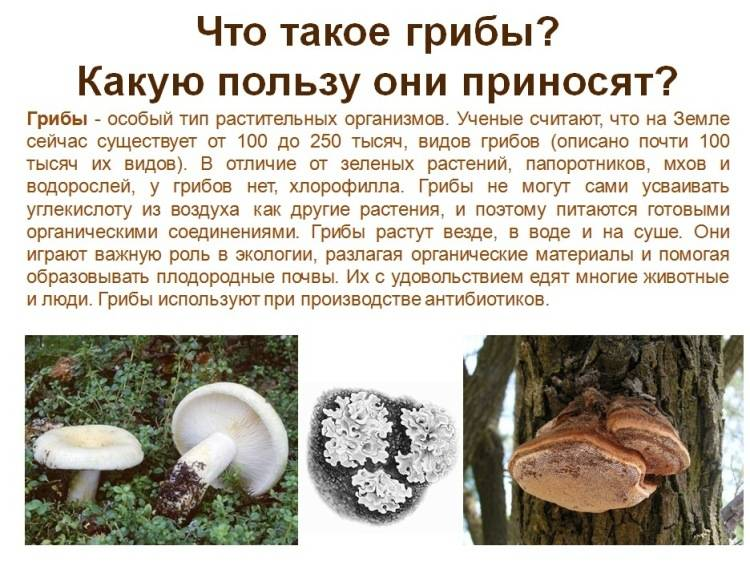 ✅ перевариваются ли грибы в желудке у человека —
