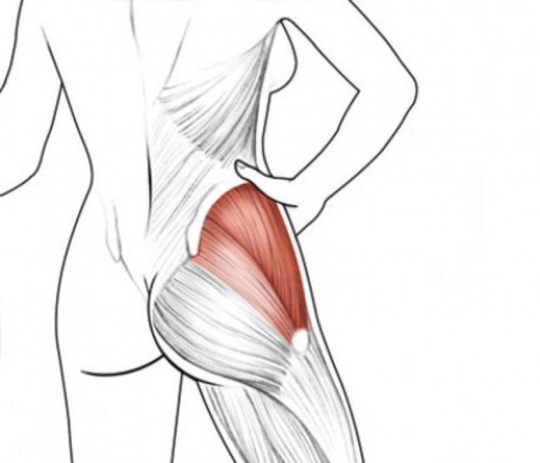 Ягодичные мышцы это больше, чем просто подушки для  сидения   центр дикуля