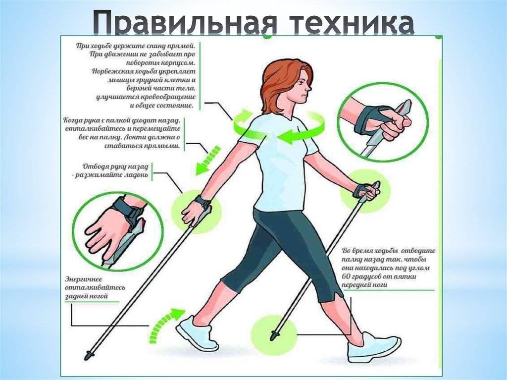 Скандинавская ходьба: 7 причин для ходьбы с палками. как ходить скандинавской ходьбой с палками