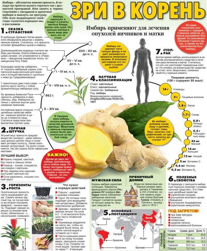 Имбирь – состав, польза, вред и противопоказания при похудении
