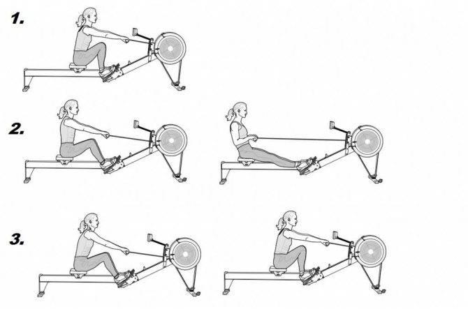 """Занятия на гребном тренажёре: какие мышцы работают и рекомендации к упражнениям """"гребля""""   rulebody.ru — правила тела"""