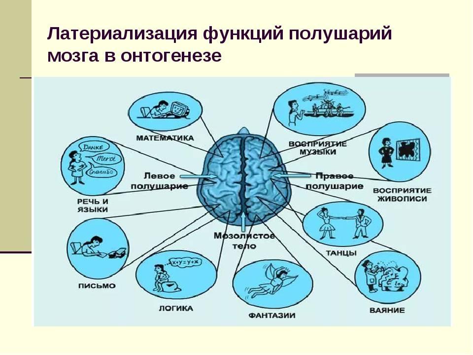 Интеллектуалы не толстеют. как работает мозг человека и на что он способен?   здоровье   аиф красноярск