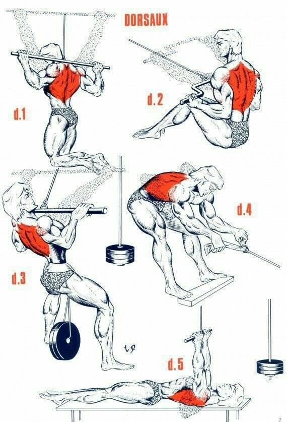Спорт это лучшие упражнения для развития мощной спины