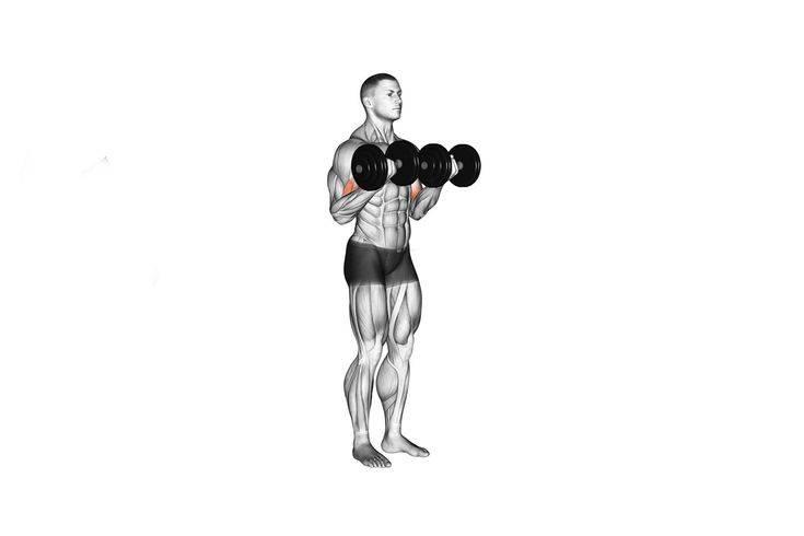 Подъем гантелей на бицепс сидя и техника выполнения упражнения