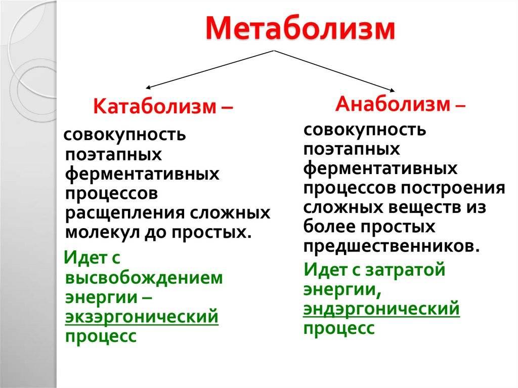Катаболизм — википедия. что такое катаболизм