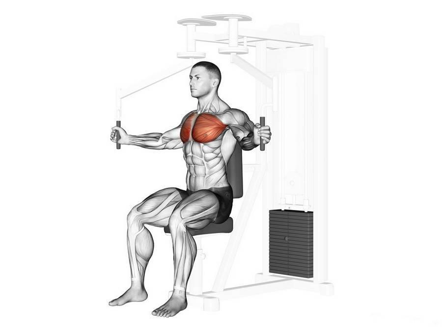 Сведение рук перед грудью на тренажере - всё о спортивных тренировках