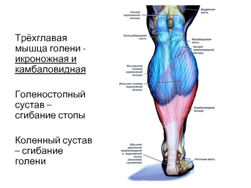 Мышцы верхней конечности [1986 гаврилов л.ф., татаринов в.г. - анатомия]