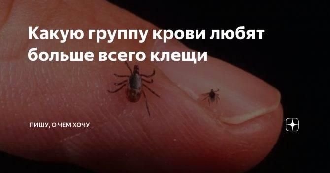 Людей с какой группой крови чаще кусают комары