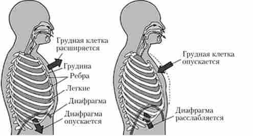 Диафрагмальное дыхание - техника, польза и вред брюшного дыхания