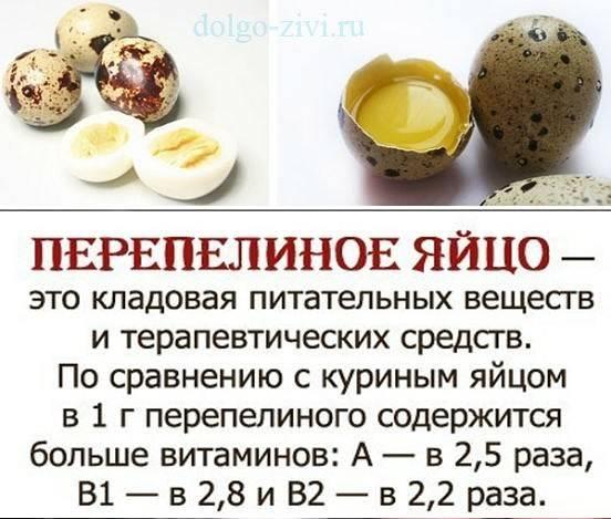Вредно ли есть яйца и холестерин? что знает наука - новости медицины