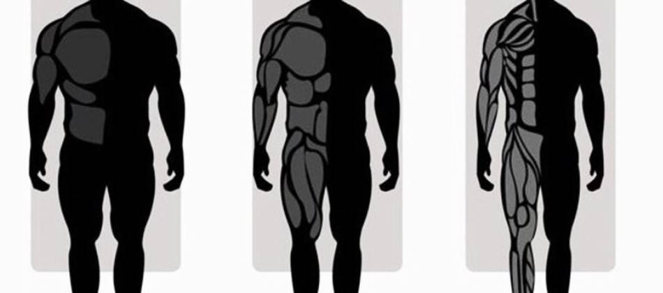 Питание по типам телосложения для мужчин: эктоморф, эндоморф, мезоморф | курсы и тренинги от лары серебрянской
