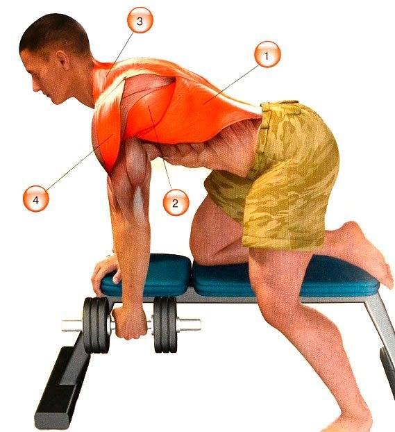 Тяга гантели к поясу в наклоне: техника выполнения и видео — fit4gym - бодибилдинг и фитнес для начинающих