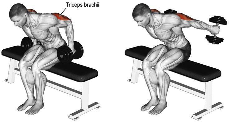 Как накачать трицепс: видео, упражнения, программа тренировок