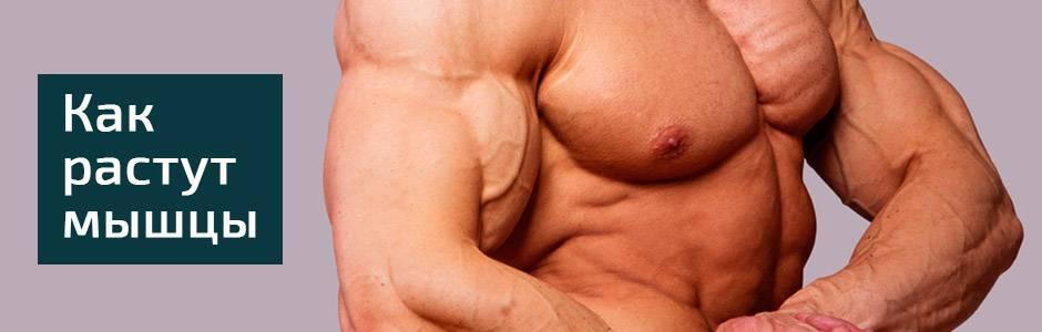 Механизмы гипертрофии мышц человека механизмы гипертрофии мышц человека