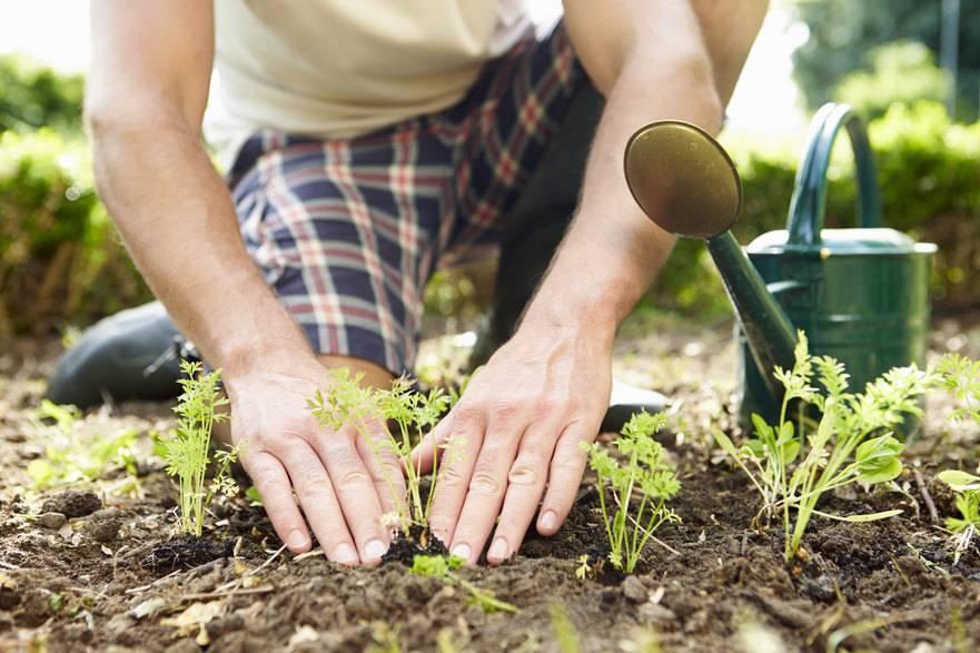 Уход за огородом и садом круглый год: краткое руководство