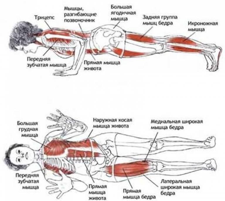 Обратная планка: как правильно делать упражнение, какие мышцы работают, польза, фото техники выполнения