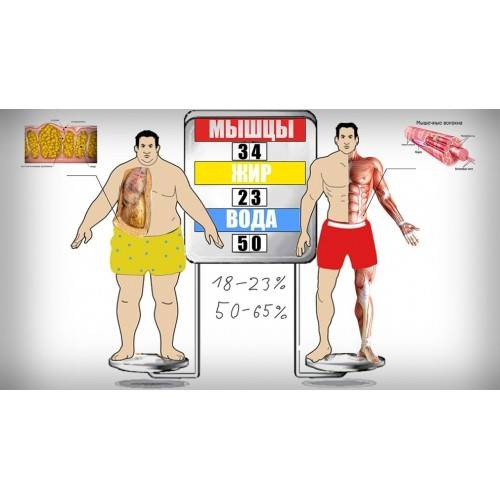 Как сжигать жир и набрать мышечную массу – my workouts