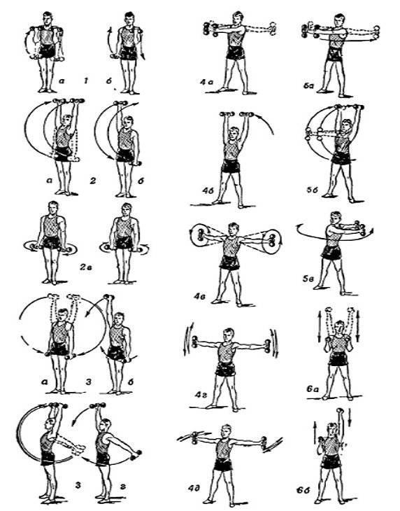 Программа тренировок дома с гантелями для мужчин для набора мышечной массы