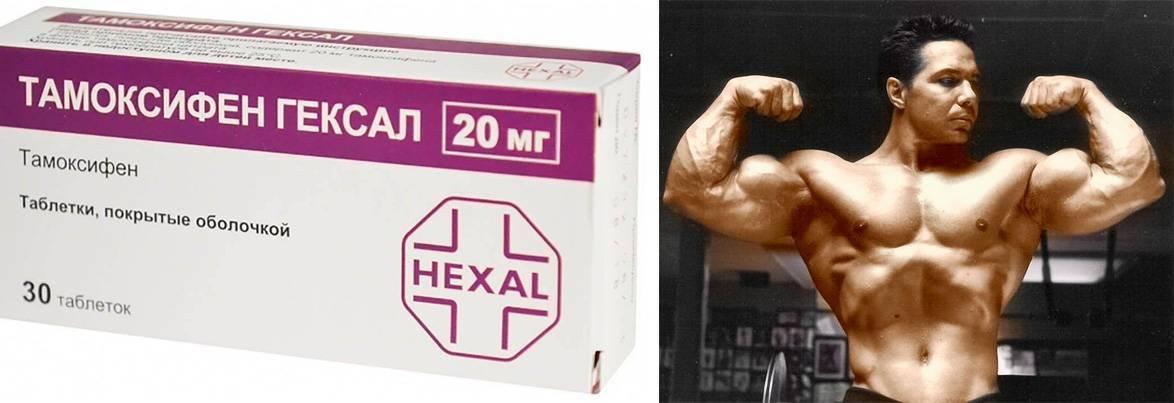 Летрозол и тамоксифен для мужского пола: как правильно принимать в бодибилдинге и другие моменты