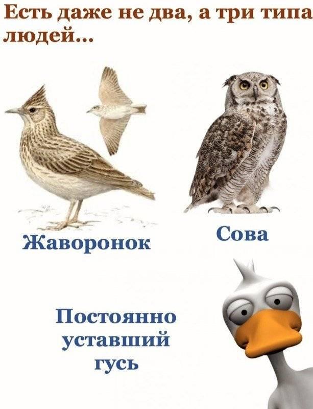 Хронотипы человека: совы и жаворонки