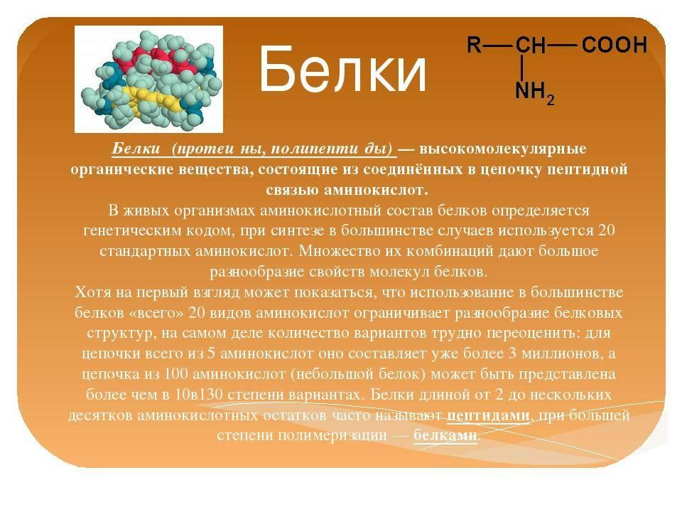Анатомия белка человека - информация: