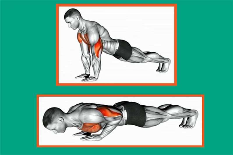 Отжимания: какие мышцы качаются, все виды отжиманий