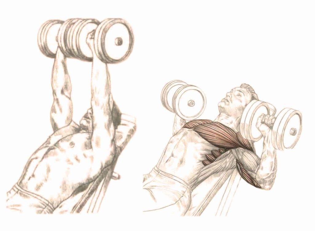 Жим гантелей лёжа ✪ какие мышцы тренируются и как правильно выполнять