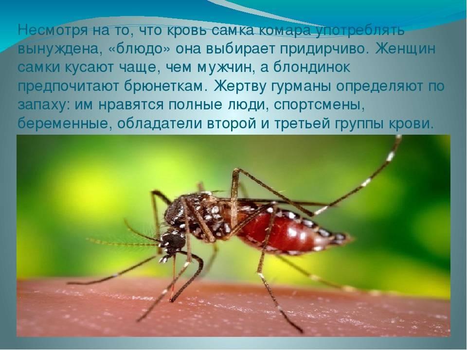 Кого чаще всего кусают комары: группа крови и другие факторы