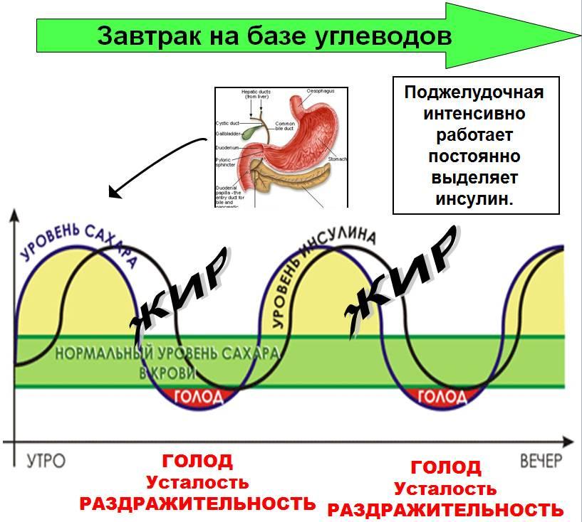 Инсулин и похудение - влияние гормона на вес человека