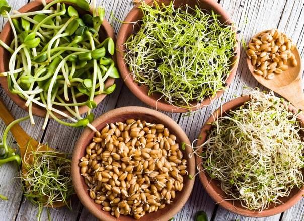 Польза и вред соевых проростков, рецепты, как прорастить сою