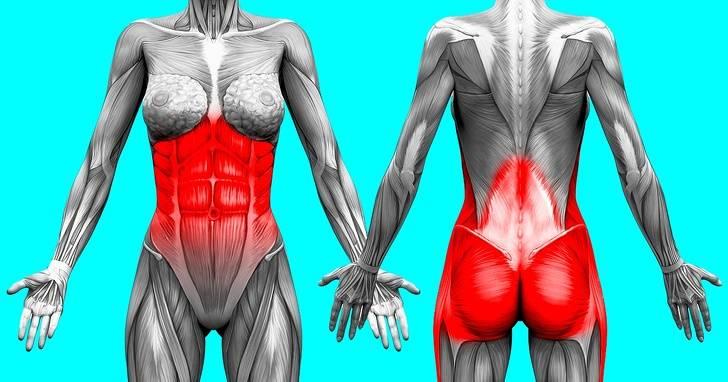 12 лучших упражнений для развития мышц кора