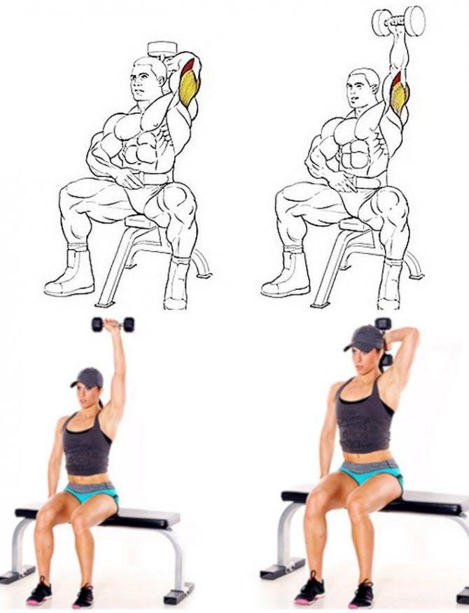 Как накачать трицепс — лучшие упражнения. описания техники и фото