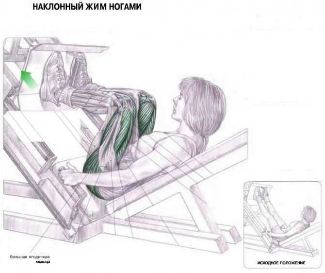 Жим ногами в тренажере гакк: техника выполнения и ошибки