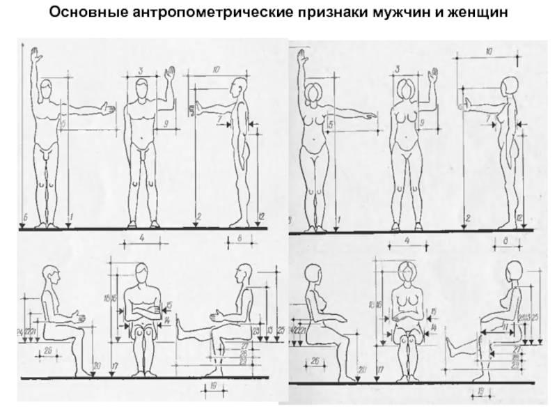 Какими должны быть пропорции тела менс физик?