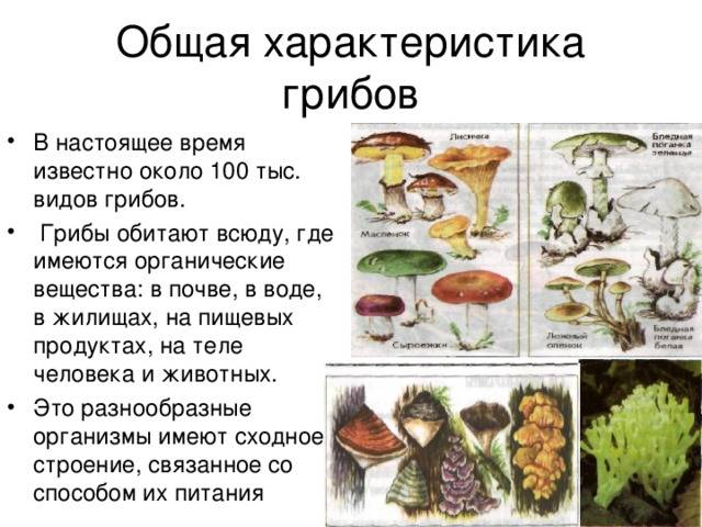 ✅ грибы как перевариваются в желудке - akrobatika-sevastopol.ru