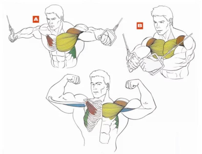 Как накачать верхнюю часть грудных мышц в домашних условиях: лучшие упражнения
