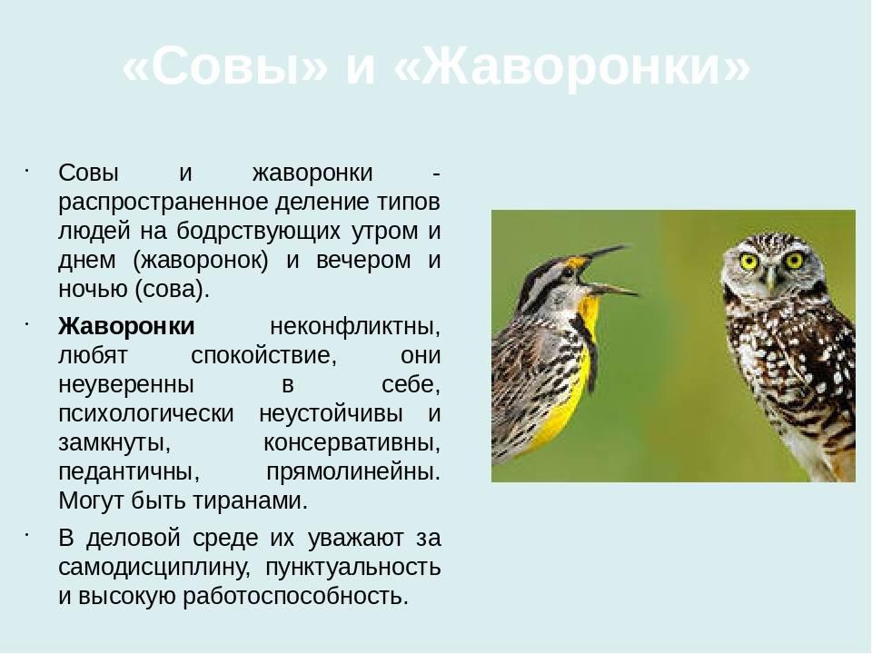 Хронотипы людей: когда ложатся спасть и встают жаворонки, совы и голуби - все курсы онлайн