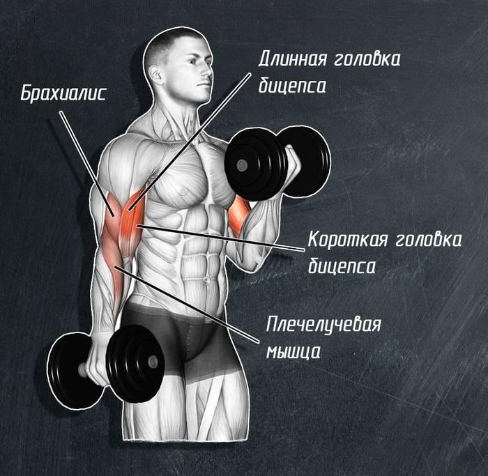 Как накачать трицепс: универсальные ключи к успеху для прокачки мощных мышц в зале и дома с тренировками