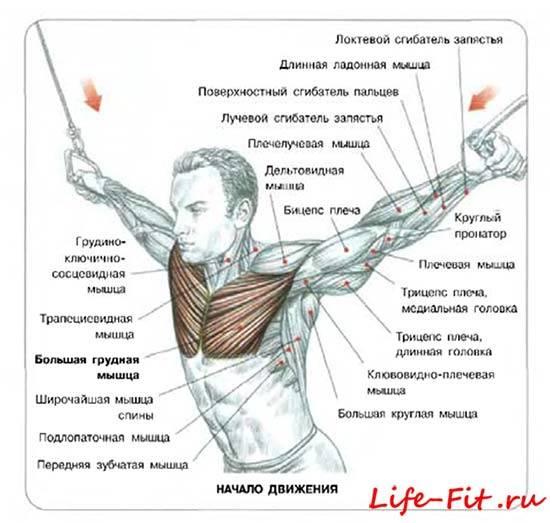 Липома (жировик): причины, удаление, лечение – напоправку – напоправку