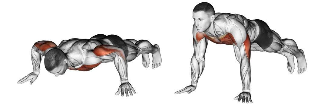 Обратные отжимания от скамьи: техника выполнения, какие мышцы работают