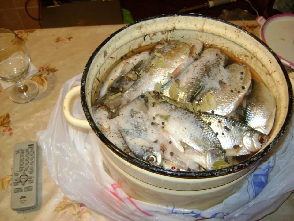 Как засолить красную рыбу: советы по выбору и разделке рыбы, рецепты засолки деликатеса разными способами