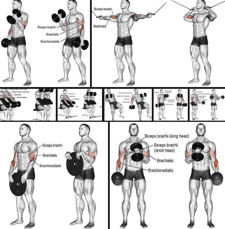 Как быстро накачать руки в домашних условиях, упражнения