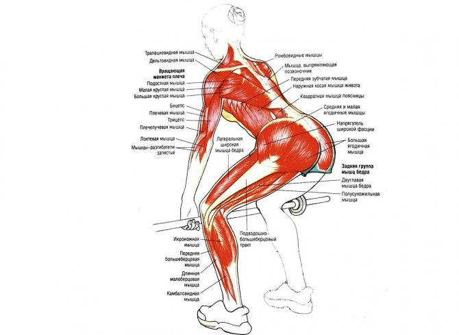 Становая тяга с гантелями: техника выполнения, какие мышцы работают